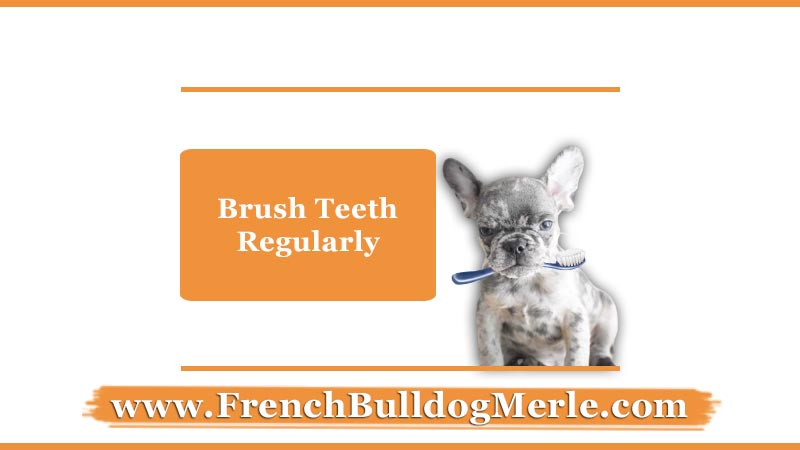brush teeth regularly