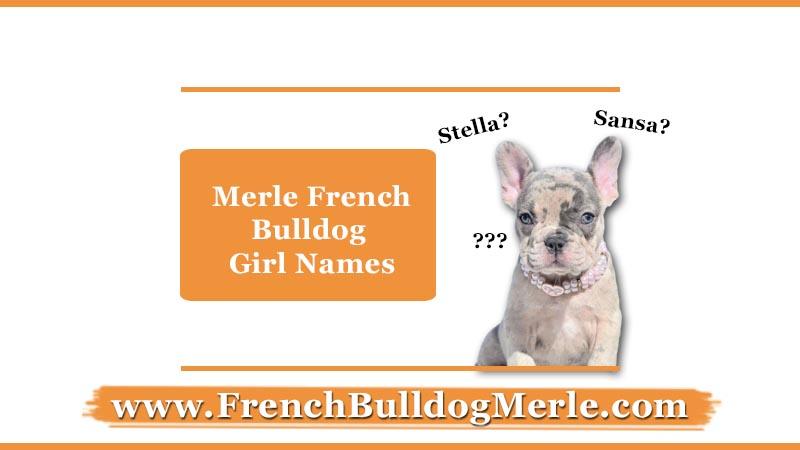 merle french bulldog girl names